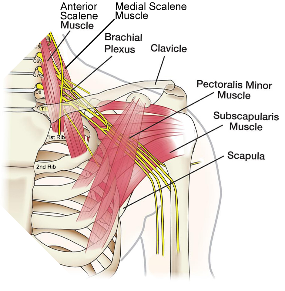 Shoulder Pain - Chiropractor in Amherst, NY